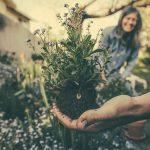Projektowanie i zakładanie ogrodów jako pomysł na dobry biznes