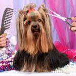 Pielęgnacja psów godnym uwagi alternatywnym pomysłem na biznes