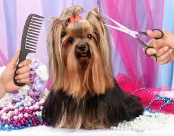 Pielęgnacja psów - pomysł na biznes